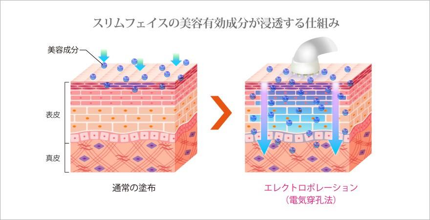 スリムフェイスの美容有効成分が浸透する仕組み