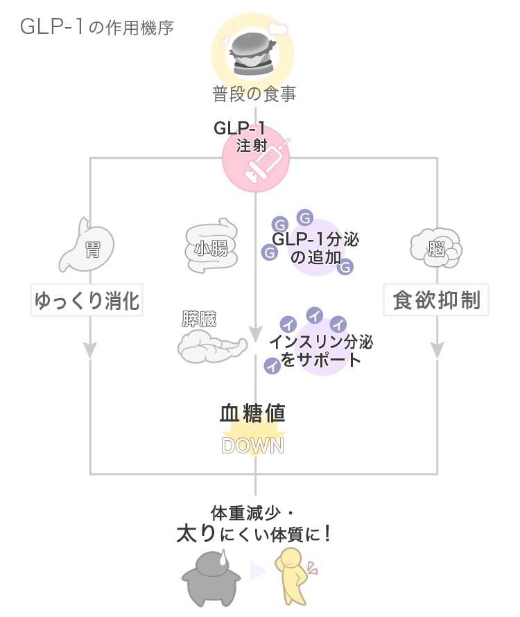 GLP-1の作用機序