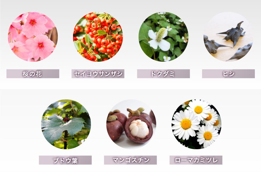 桜の花 セイヨウサンザシ ドクダミ ヒシ ブドウ葉 マンゴスチン ローマカミツレ